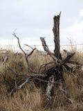 Bois mort sur Straw Grass Images stock