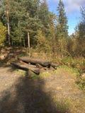Bois norvégiens Images stock