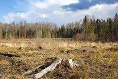 Bois notant le tronçon après des bois de déboisement image libre de droits