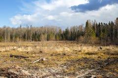 Bois notant le tronçon après des bois de déboisement photographie stock