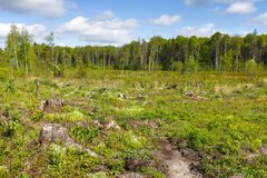 Bois notant le tronçon après des bois de déboisement photographie stock libre de droits