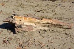 Bois pétrifié dans le Patagonia Photos libres de droits