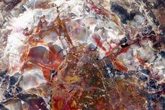 Bois pétrifié Merveille abstraite de couleur de nature Photos libres de droits