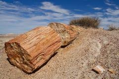 Bois Petrified au stationnement national de forêt Petrified Images stock