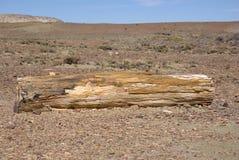 Bois Petrified dans le Patagonia Photos stock
