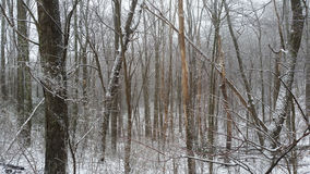 Bois ronds de bouton avec la neige photos stock
