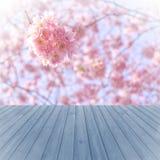 Bois rouge de perspective vide au-dessus des arbres brouillés et de floraisons avec le fond de bokeh, pour le montage d'affichage Photo stock