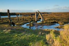 Bois saillant à marée basse Image libre de droits