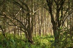 bois sauvages photos libres de droits