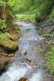 Bois sauvages de rivière au printemps Herbe verte et fleurs blanches Images libres de droits