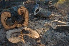 Bois scié incurvé et figurate d'un grand tronc d'arbre Photo libre de droits
