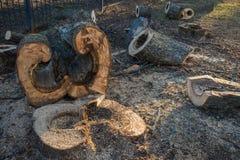 Bois scié incurvé et figurate d'un grand tronc d'arbre Image libre de droits
