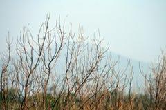 Bois sec sur le bleu photographie stock