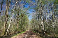 Bois simple à feuilles caduques en premier ressort Image libre de droits