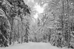 Bois Snow-covered de l'hiver Images libres de droits