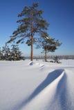 Bois snow-covered de l'hiver par temps givré Photographie stock