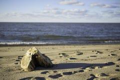 Bois sur la plage Images libres de droits