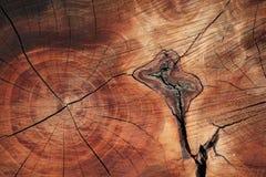 Bois-texture Image libre de droits