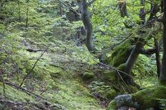 Bois tordus Photo libre de droits