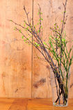 Bois vert de branchement de source illustration stock