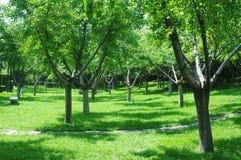 Bois verts à la lumière du soleil Image libre de droits