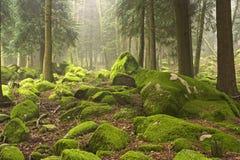 Bois verts Image libre de droits