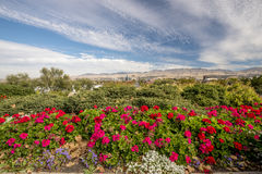 Boise city with red flowers and clouds. Public garden and city of Boise Idaho skyline Royalty Free Stock Photo
