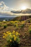 Boise flod på solnedgången med sunstar och blommor royaltyfri bild