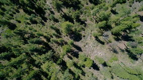 Boise forest in the high Idaho mountains stock video footage