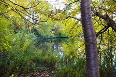 Beautiful Green Space in the City. Boise, Idaho is nicknamed the City of Trees and is home to many beautiful parks and greenbelt paths along the river and ponds Royalty Free Stock Photo