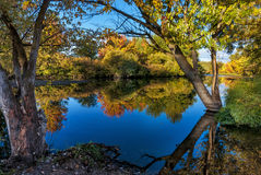 Boise River Autum Trees Royalty Free Stock Images