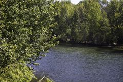 Boise River. The Boise river flows through a heavily wooded area stock photography