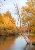 Boise River med nedgångträdfärger som reflekterar Royaltyfri Fotografi