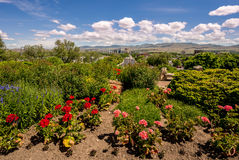 Boise Skyline and flowers in a city park. View of Boise Idaho from a city park Royalty Free Stock Image