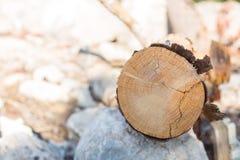 Boisez le fond en bois de rondin de belle nature haute étroite Photographie stock libre de droits