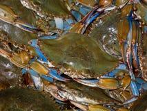 Boisseau de crabes bleus Photographie stock libre de droits