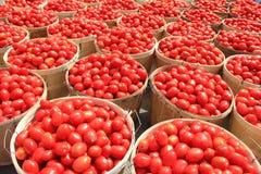 Boisseaux 1 de tomate Images libres de droits