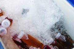 Boisson de fines herbes sur la glace photos stock