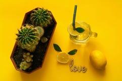 Boisson de limonade d'agrume de l'eau de seltz en verre avec des cactus boisson de l'eau de detox en été Humeur au néon de FGreen Photos libres de droits