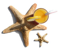 Boisson et étoiles de mer tropicales photo stock