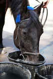 Boissons de cheval d'une position image stock