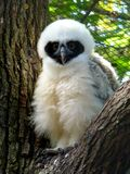 Bojaźliwy ptak Fotografia Royalty Free