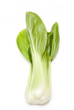 Bok Choi. (also known as Pak Choi), a chinese leaf isolated on white background Royalty Free Stock Photos