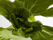Bok choi leaves Stock Photo
