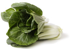 Bok Choi over white Stock Photography