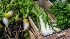 Bok Choy和萝卜待售在农夫市场上 图库摄影