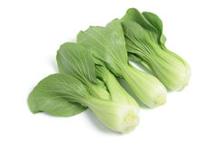 Bok Choy Stock Photography
