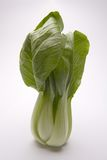 Bok Choy. A head of Bok Choy leafy greens isolated on white Royalty Free Stock Images