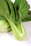 Bok Choy 2 Royalty Free Stock Photography