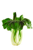 Bok choy. Fresh Bok choy (Chinese cabbage) isolated on white Royalty Free Stock Photography
